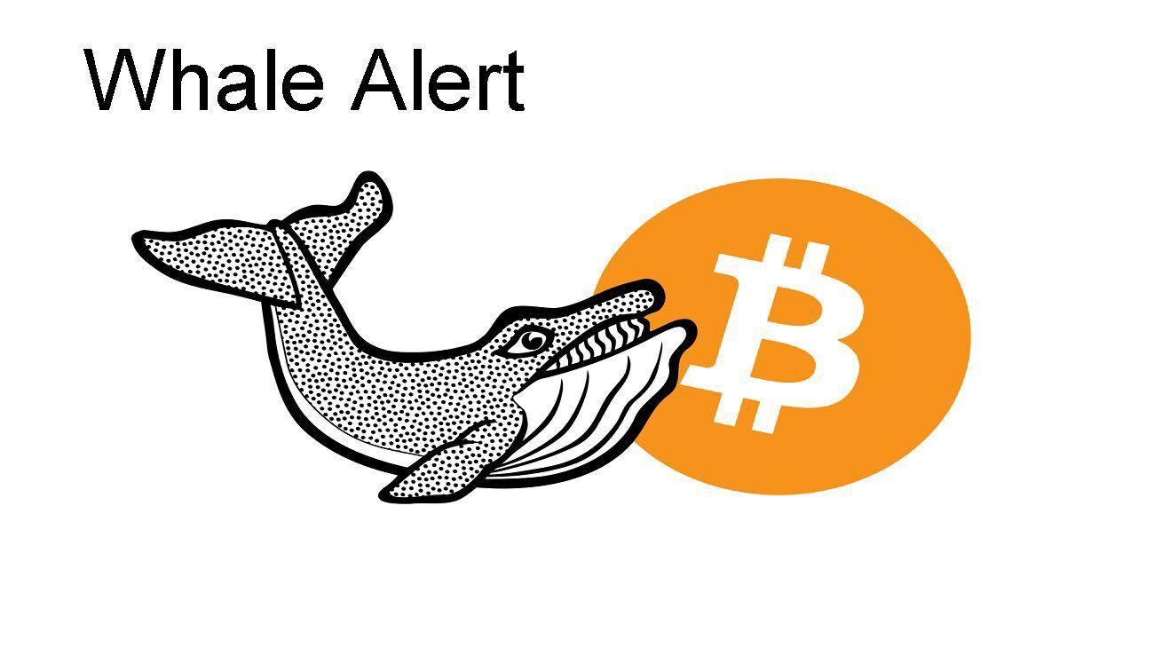 Bitcoin Cüzdanlarında Korkutan Hareket