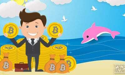 Bitcoin Balinalarının Hareketleri Nasıl? Ayı Mı Boğa Mı?