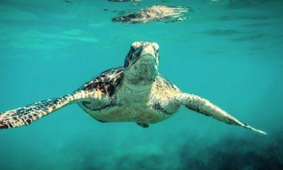 TurtleDex Yatırımcılarına Rug Pull Şoku!