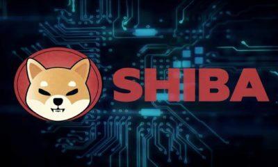 SHIBA Nedir? Nereden Satın Alabilirsiniz?